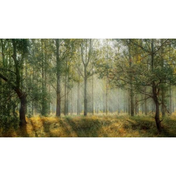 Pantone прогнозира, че Nature Remastered ще бъде новия най-актуален цвят през Есен - Зима 19/20