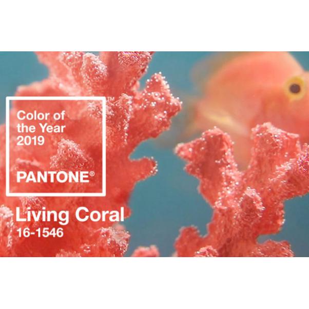 """Цветът на годината през 2019 е """"Живият корал"""""""